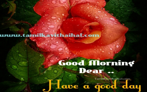 awsome tamil good morning wishes kalai vankkam dp status download