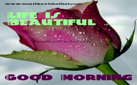 gud morning wishes in tamil kalai vanakkam quotes and images download