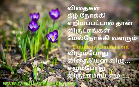 best self confidence positive thoughts quotes in tamil language real life thathuvam whatsapp pic download