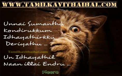 painful kavithai english words love failure thanglish kavithai sana cat images