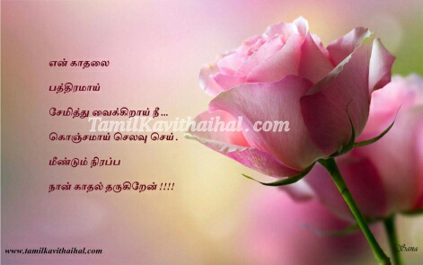 Love Pink Rose College Kadhal Feel Tamil Kavithai Thanimai wallpaper Husband Wife