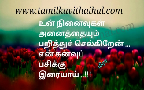 amazing lines for kadhal kavithai ninaivukal anaithum en kanavu pasi dream girl beauty love meera poem pic