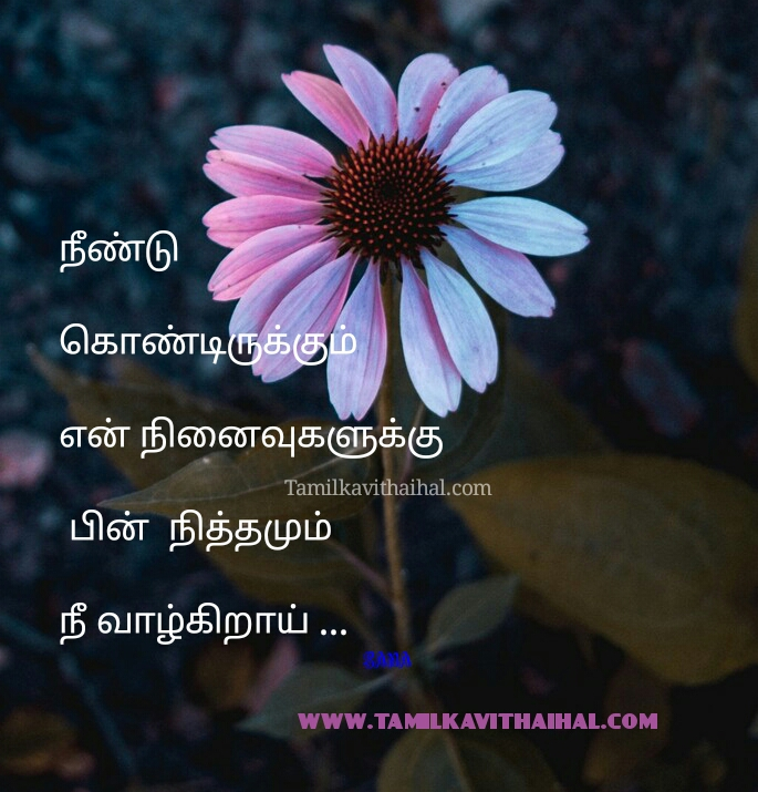 awesome lovefeel kadhal kavithaigal sana images