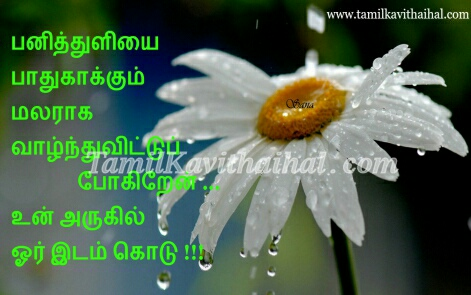 most beautiful white flower panithuli malar kavithai boy feel