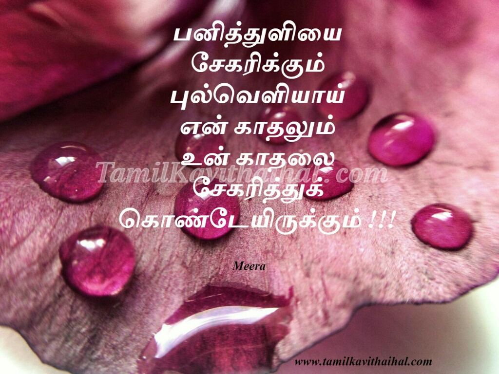 panithuli sekarikkum pulveli love kavithai in tamil cute kadhal boy feel meera poem facebook images download