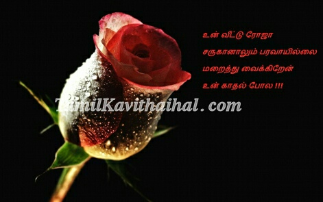 rose black girl feel love quotes tamil kavithai