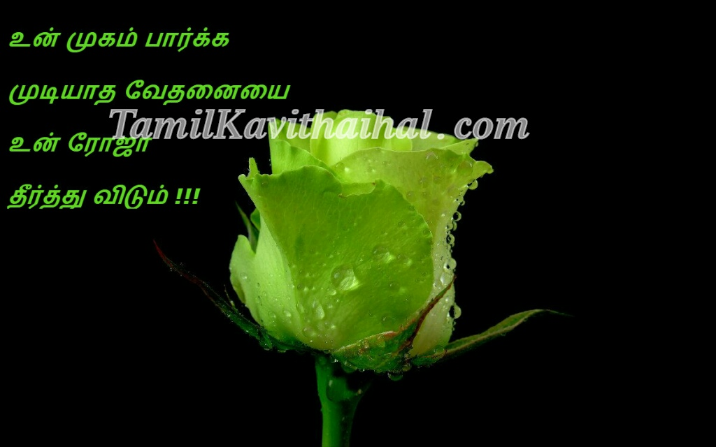rose green tamil kadhal kavithai sad quotes