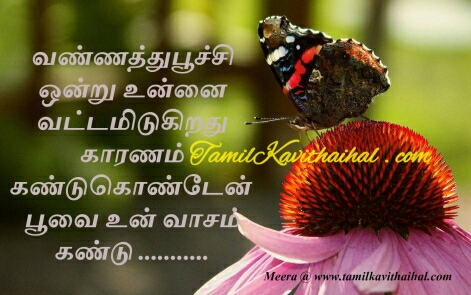 tamil kadhal kavithai beautiful butterfly love quotes poo sana vasam facebook images download