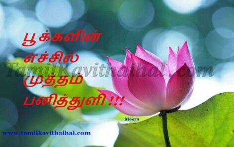 tamil kavithai pookal echil panithuli flower poo meera varnanai images