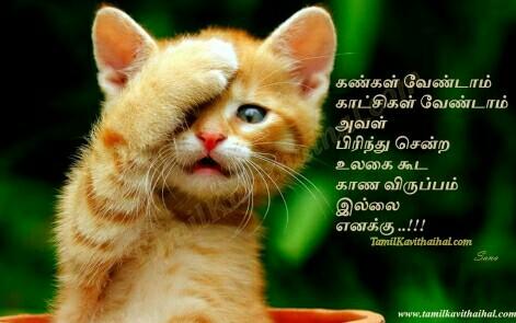 aval prinithu sendral tamil kavithai kanneer pirivu sogam cat kadhal tholvi images download