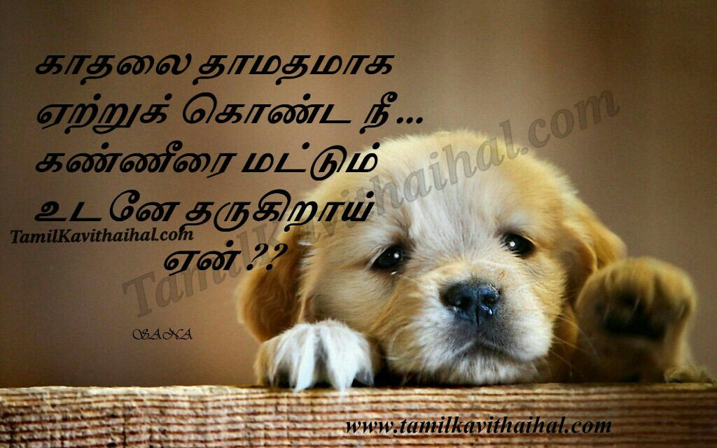 kadhal parisu kanneer matumae kadhal tholvi love failure veruppu very sad quotes tamil lines sana husband wife