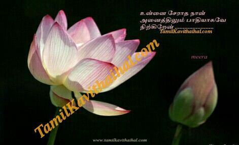 lotus love feel tamil sad kavithai kadhal