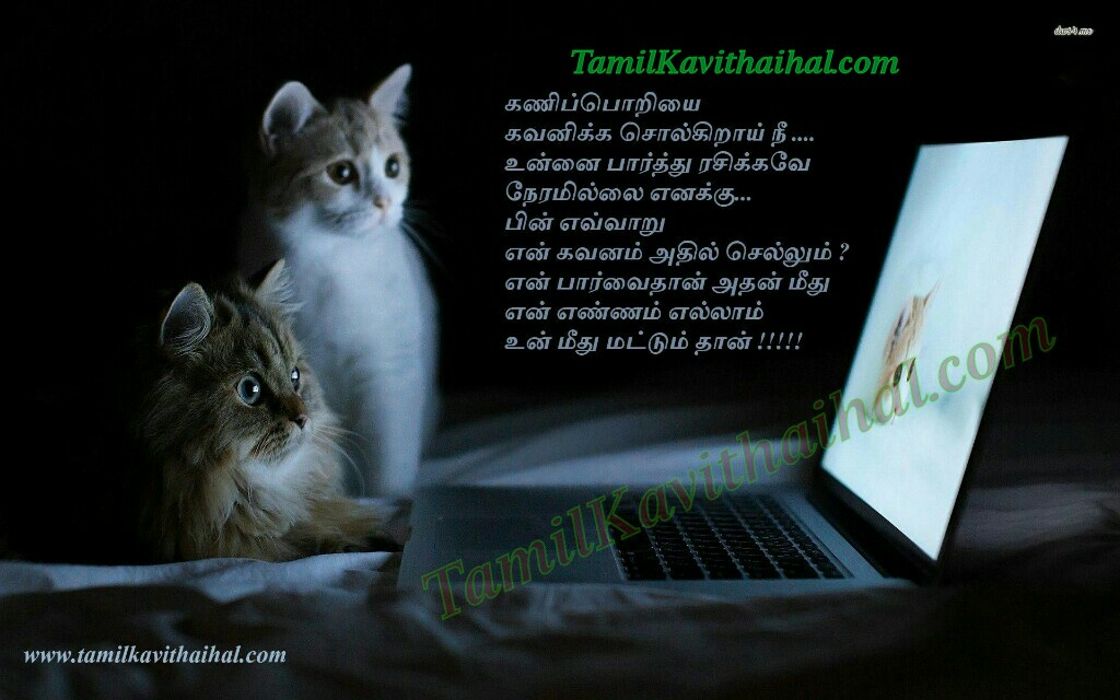 Beautifull Kadhal Kavithai Tamil Cat Romance Laptop