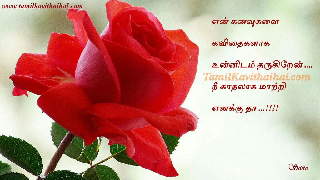 Red Rose Flowers Kadhal Romance Feel Tamil Kavithai Kanavu Thanimai wallpaper