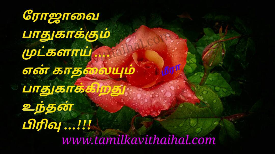 Awesome love feeling in tamil roja mutkal protect kadhal pathukappu un pirivu meera poem whatsapp hd wallpaper