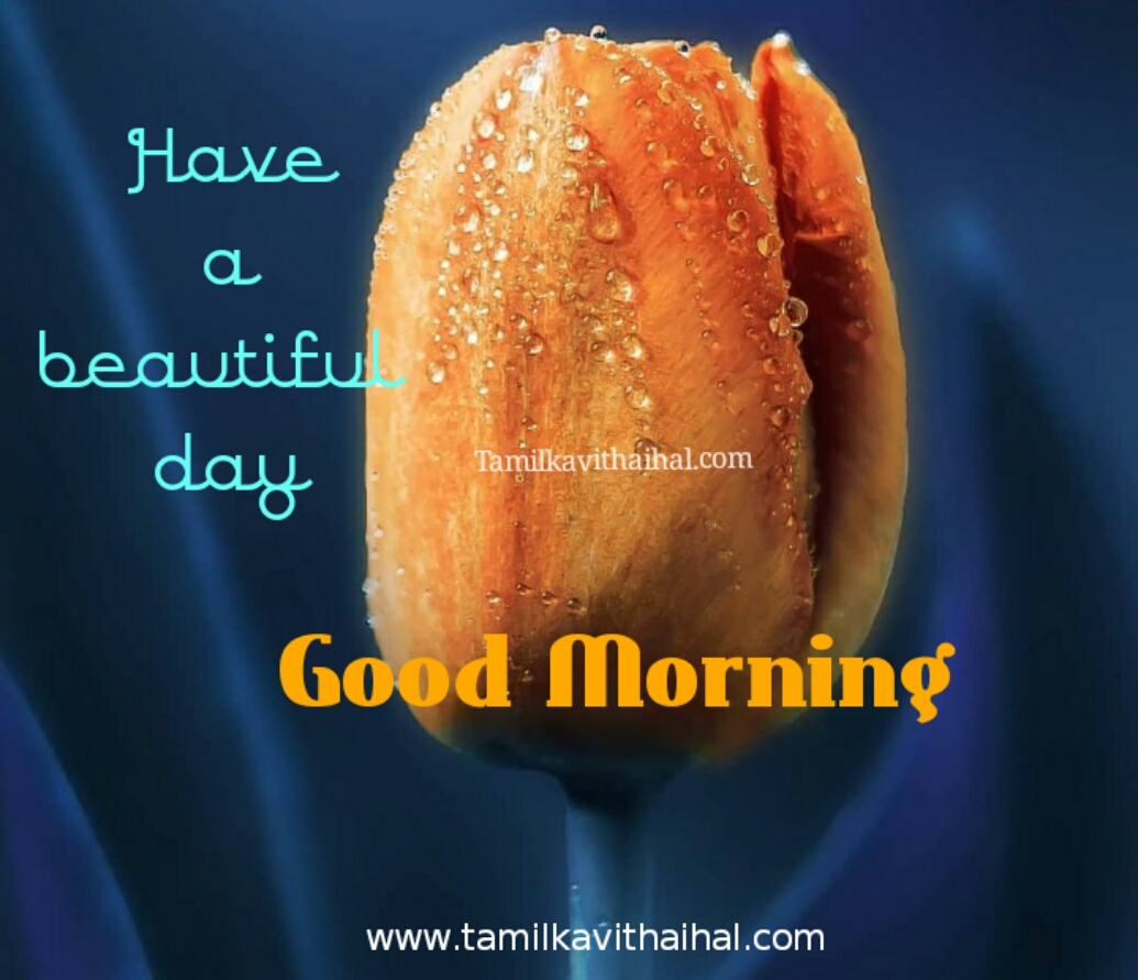 Beautiful good morning quotes in tamil kalai vanakkam msg download