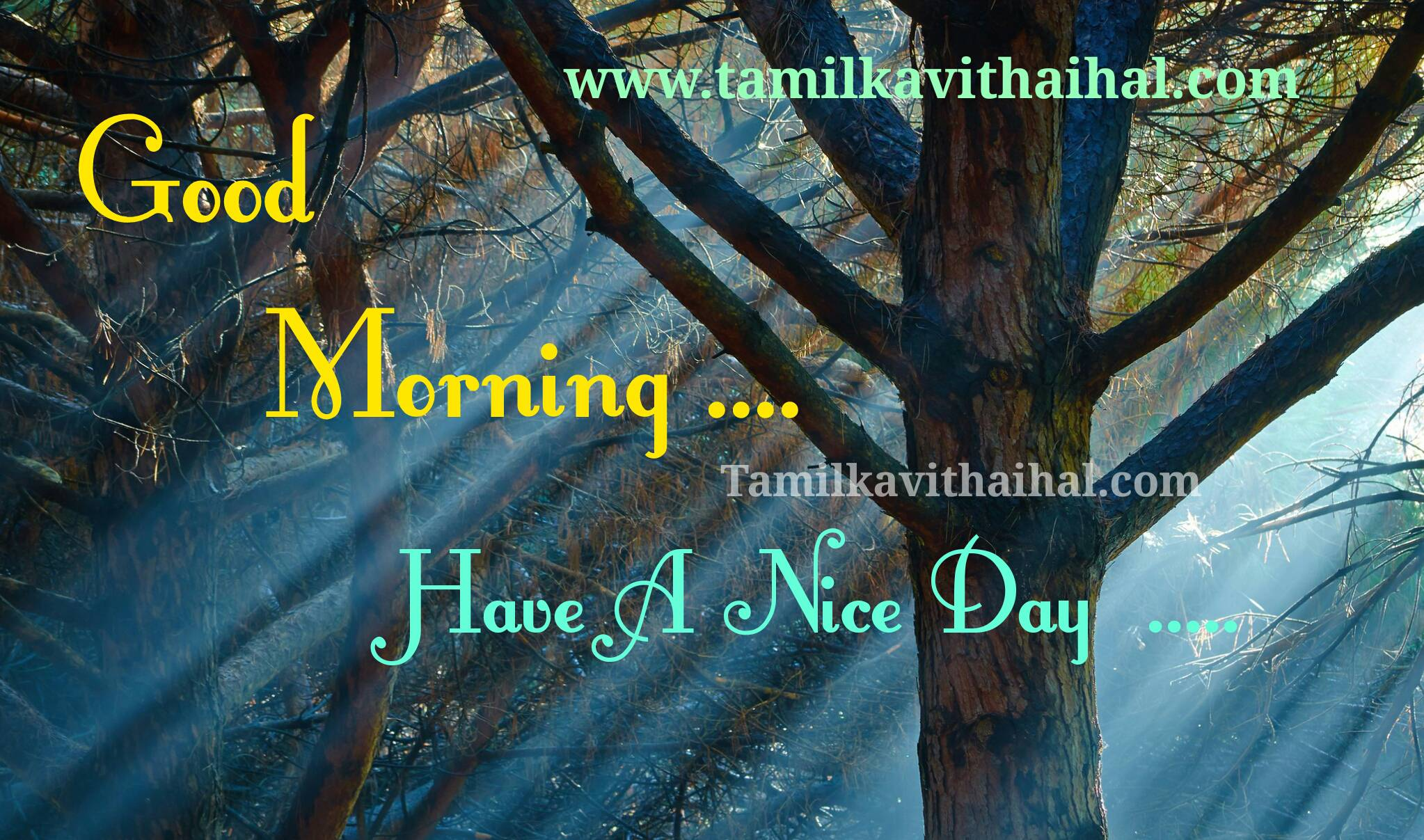 Best Gud Mrng Wishes In Tamil Good Morning Quotes Whatsapp Dp Hd
