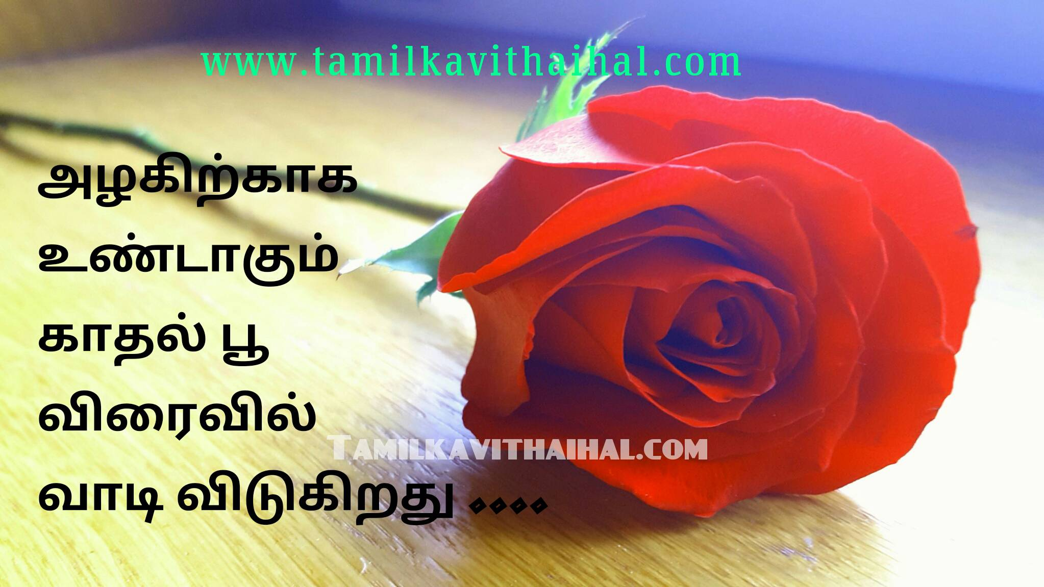 Best True Love Quotes In Tamil Beauty Kadhal Flower Strong My Life