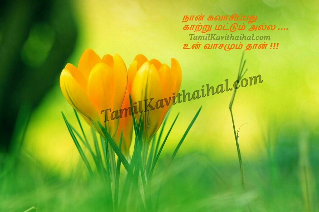 Cute Tamil Quotes Love Flower Kavithai Wallpaper Feel