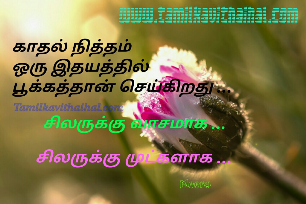 Kadhal nitham pookum idhayam silaruku mutkal vasam best words for kanner kavithai meera poem facebook images download