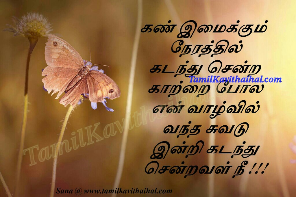 Kan imaikum nerathil kadanthu sendra kaatru vadu nee love failure quotes sogamana kadhal kavithaigal by sana