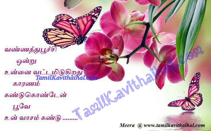 Kavithaigal tamil life butterfly vannathupoochi meera vasam poove un vaasam HD images for facebook