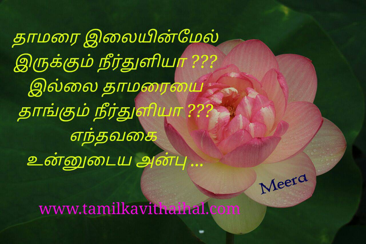 Latest real love feel between lovers kadhal kavithaigal thamarai flower neer thuli anbu girl meera quotes status photos