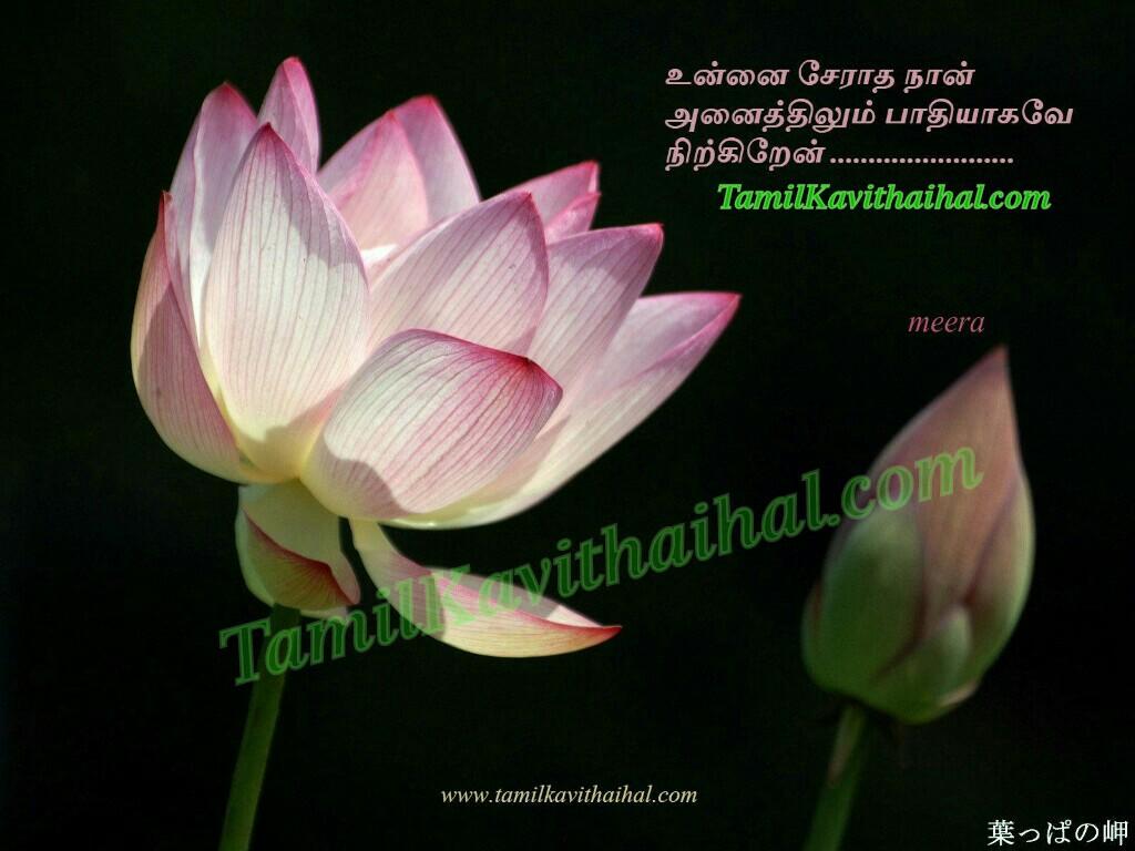 Lotus Love Feel Tamil Sad Kavithai Kadhal