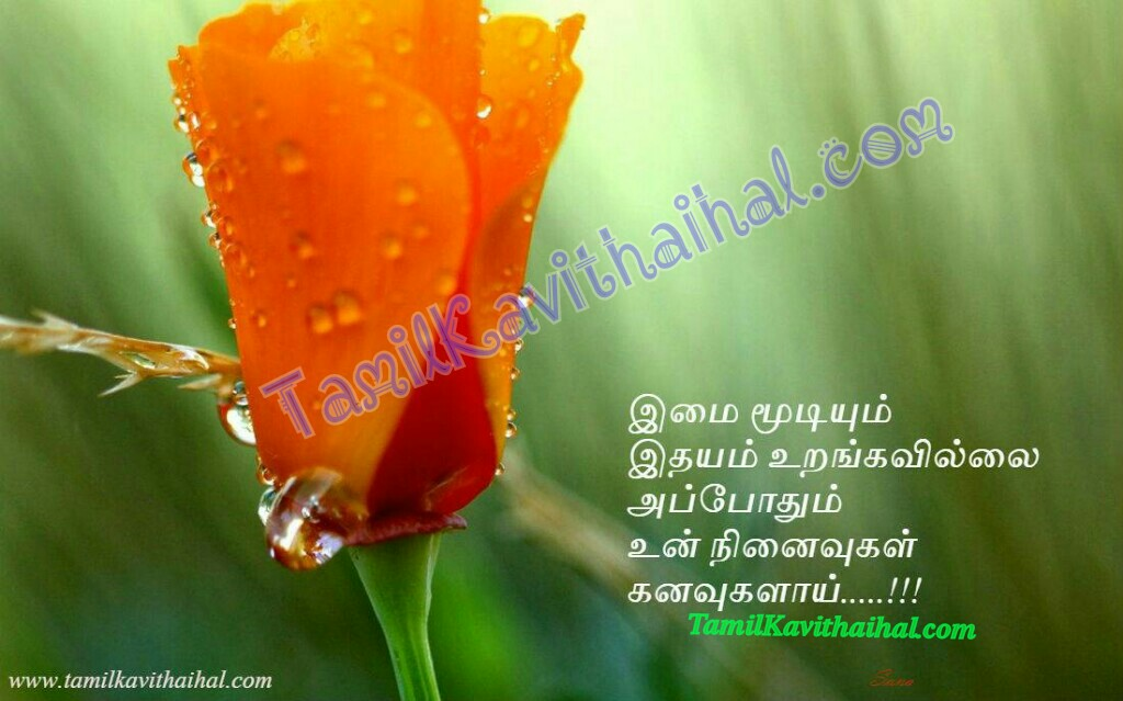 Love kavithai in tamil rose ninaivugal idhayam urangavillai sogam sad thanimai images
