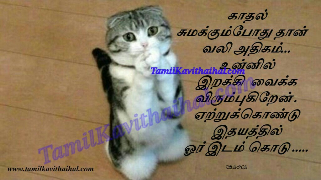 Love kavithaigal tamil kavithai quotes latest kadhal kavithaigal vali idhayam cat sana HD wallpaper images download