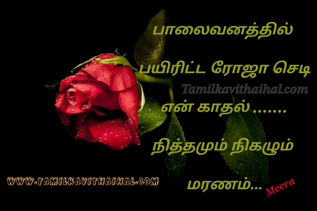 Palaivanam roja kadhal sedi nithamum nikalum maranam daily death moments meera poem whatsapp images download