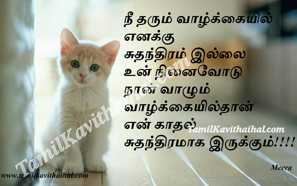 Suthanthiram valkai ninaivugal tamil kavithai cat girl feel meera images download