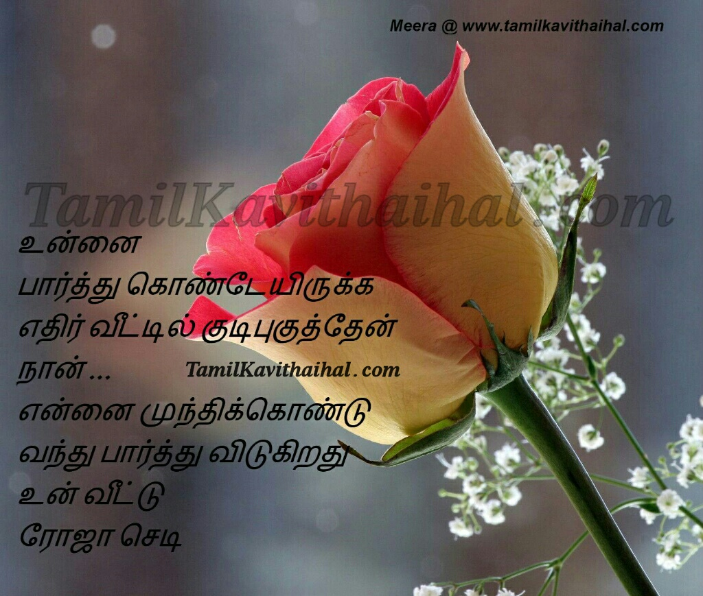 Tamil kadhal kavithai love quotes love at first sight rose veedu meera images pictures for facebook whatsapp download