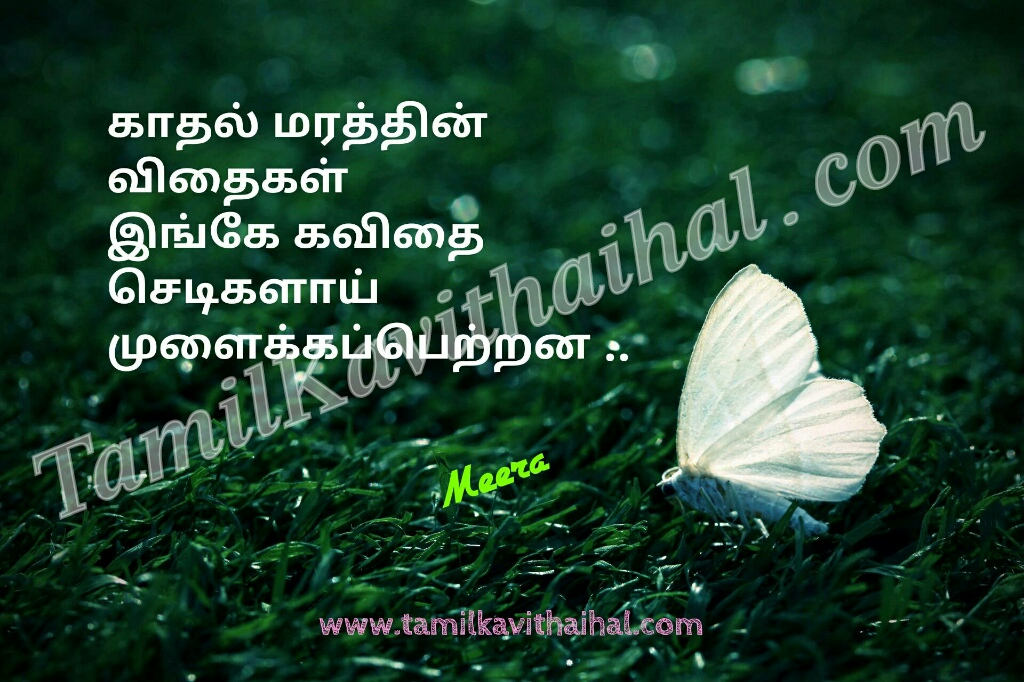 Tamil kadhal kavithai maram sedi vithai love quotes meera images