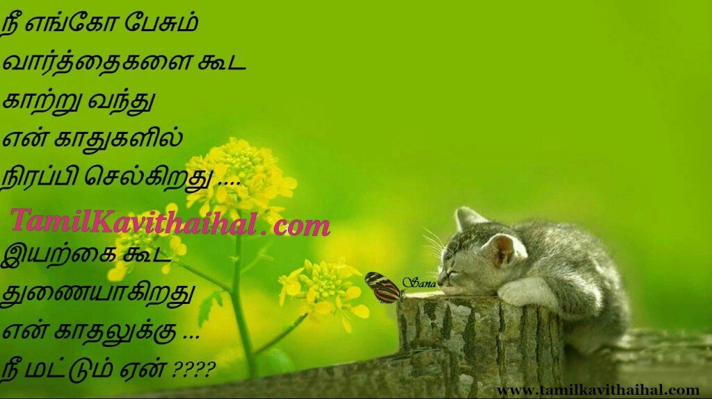 Tamil poems kanneer kavithai cat sogam iyarkai ethirparpu meera kavithai images download